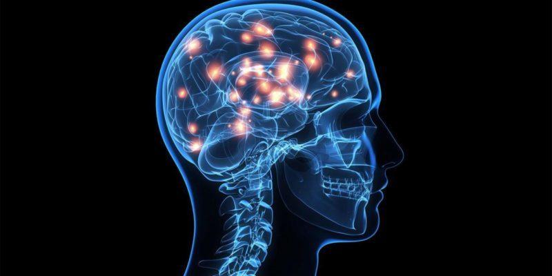 Majoring In Neuroscience